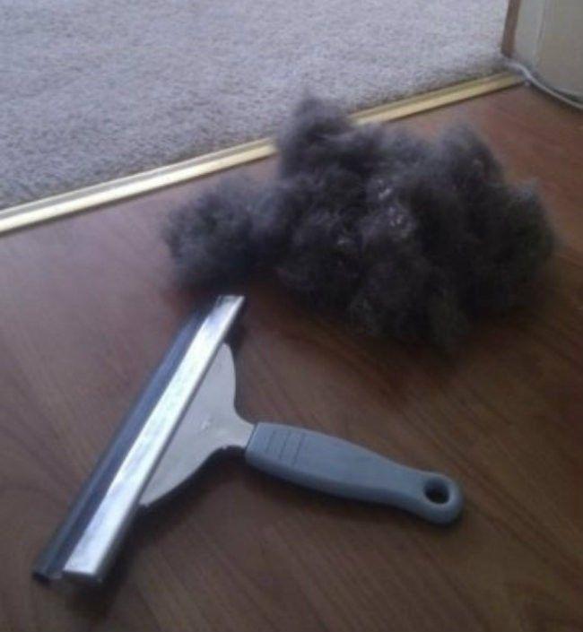 Ramasser les poils like a boss.  Avec une raclette sur le tapis, vous allez récupérer tous les poils de votre chien, de votre chat (de votre copain/ copine ?) y compris ceux dont vous ne soupçonniez pas l'existence... Attention, on est parfois surpris par ce qu'on trouve...