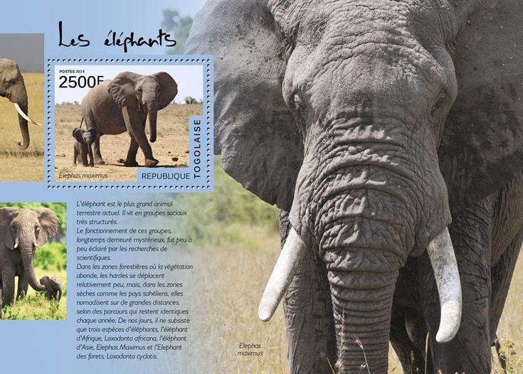 TG 14512 bElephants (Elephas maximus)
