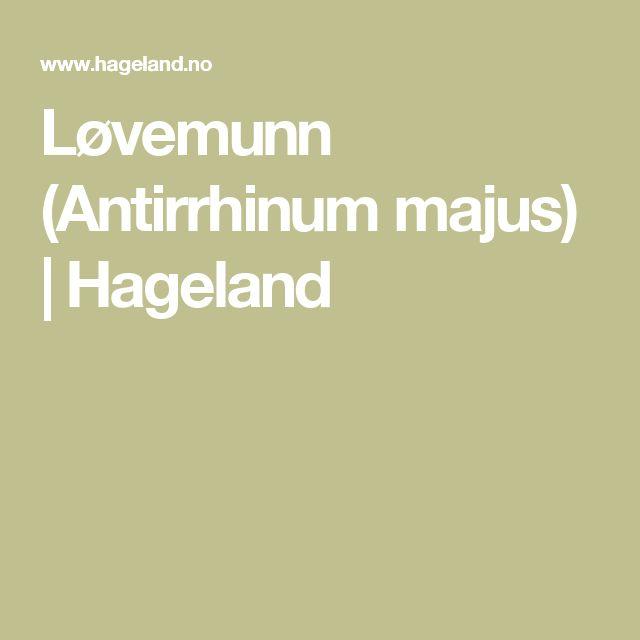 Løvemunn (Antirrhinum majus) | Hageland
