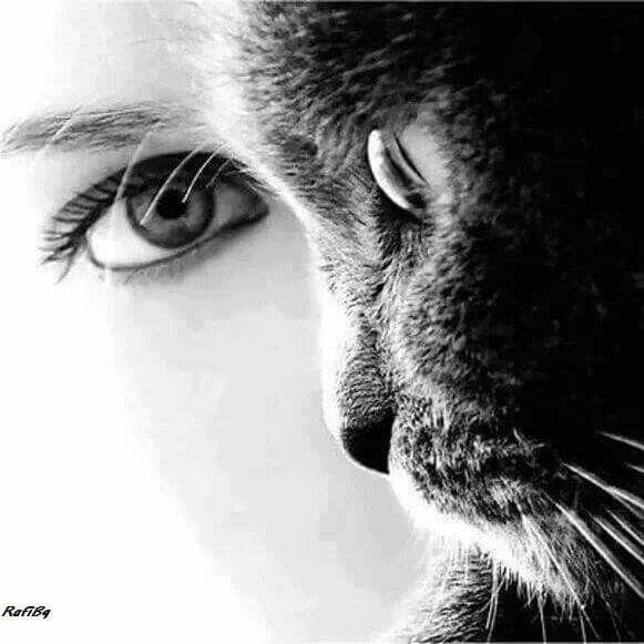 Ochi de pisica !