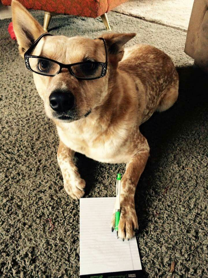 Hank the Tank making his wish list for our trip to Petco!
