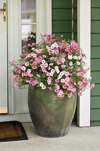 Dainty and Delicate container recipe from Proven Winners. Supertunia® Vista Bubblegum™, Supertunia® Vista Silverberry and Diamond Frost®, so simple yet stunning with the green house and pot. http://emfl.us/eaHd