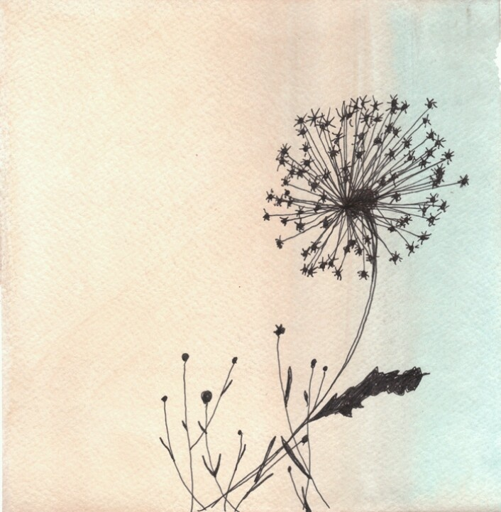 pretty dandelion drawing drawings pinterest artworks