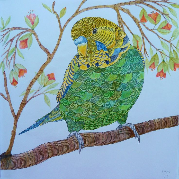 Animal Kingdom Colouring Book Pinterest Best Images About Coloring