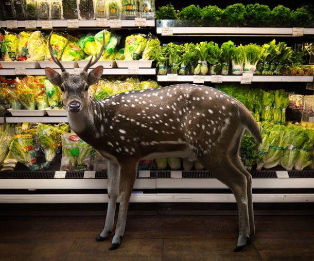 conceptuele fotografie van dieren