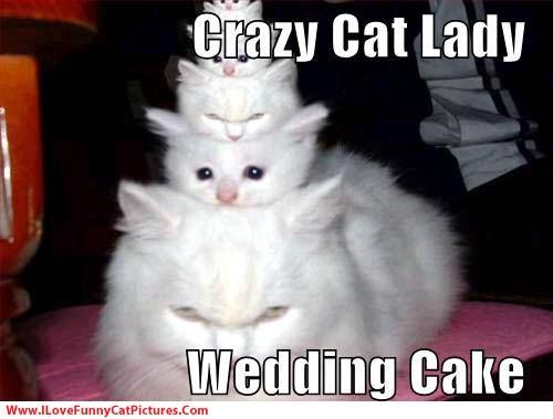 online dating lady loves cats