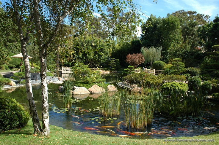 46 best images about go beach csulb on pinterest for Koi fish pond csulb