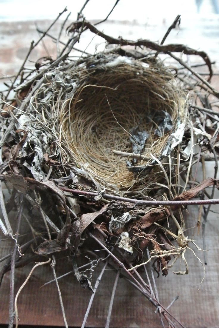 Amazing Bird's Nest that fell out of our Pear tree in a storm.