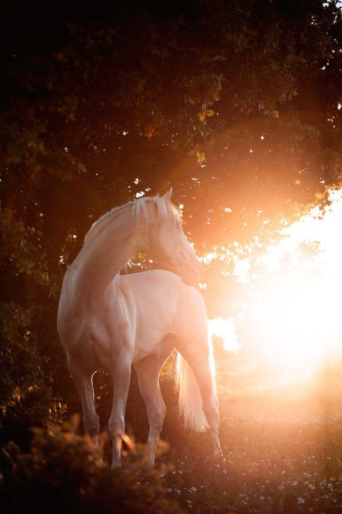 Pin Von Ute Mohring Auf Horses Sonnenauf Untergang Mondlicht In