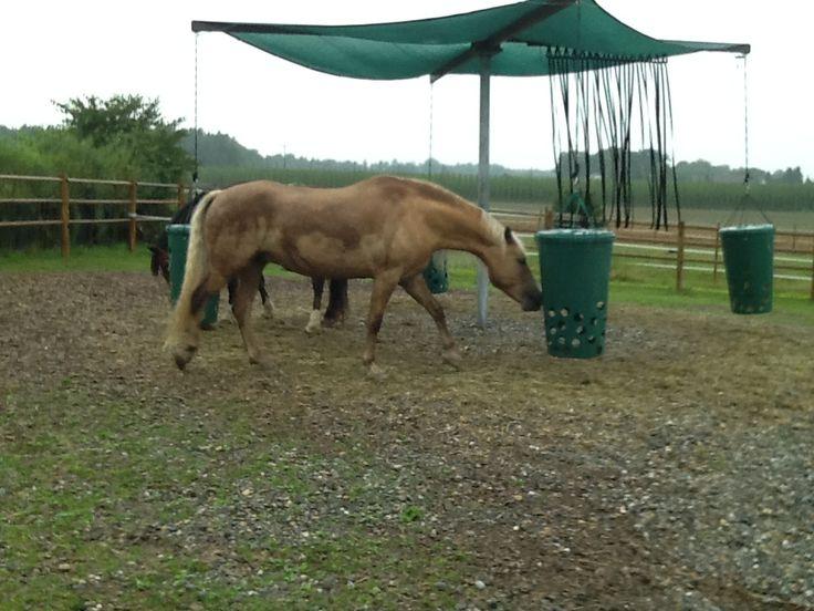 hay to go bei der heuraufe wird gestanden hier darf man pferd seine beine bewegen heu. Black Bedroom Furniture Sets. Home Design Ideas