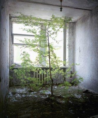 Tree in hotelroom in Prypjat, Chernobyl, Ukraine