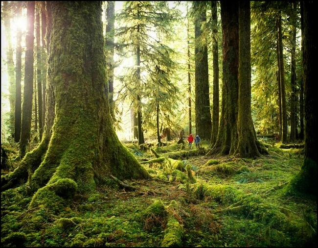 Hoh Rainforest, Olympic Penninsula, Washington: Check out the size of the trees! Those are people  in the background...home sweet home!!!