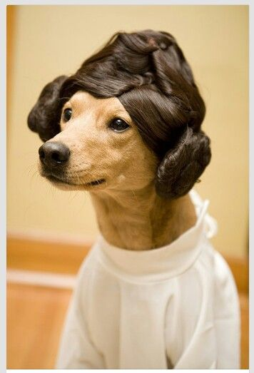 Princess Leia Dog