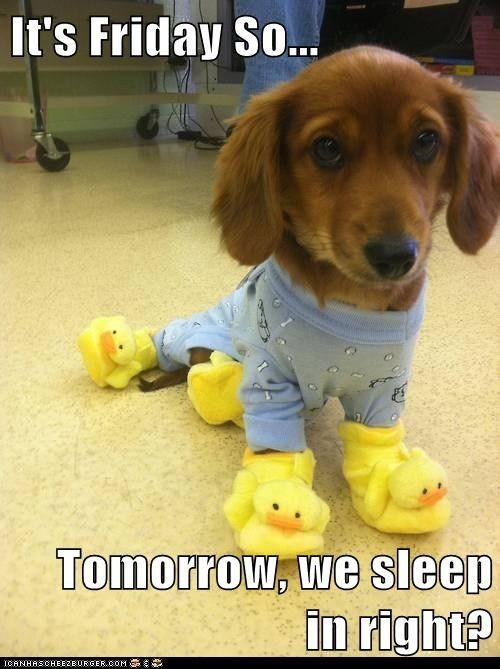 Awe!  Happy Friday Doxie!