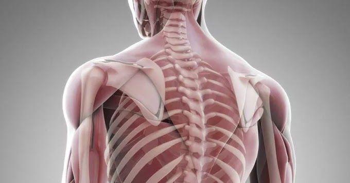 Секрет наших мышц, откладывающий старость     Секрет, который скрывают наши мышцы: биомаркеры старения и как продлить молодость     ...