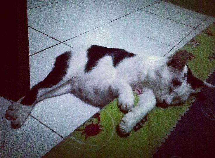 Malming with Alissa Mamao  #cat #cats #funnycat #catofinstagram #lovecat #caturday #sleepycat #indonesiacat #sleep