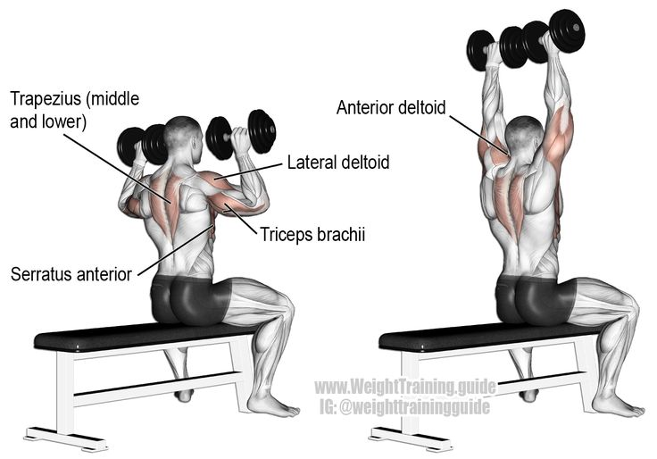 Seated dumbbell overhead press. A compound exercise. Target muscle: Anterior Deltoid. Synergists: Lateral Deltoid, Triceps Brachii, Clavicular (Upper) Pectoralis Major, Middle and Lower Trapezius, Serratus Anterior, and Supraspinatus.