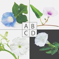 【心理テスト】魔法で花に変えられてしまうとしたら?答えでわかる恋するあなたの素顔