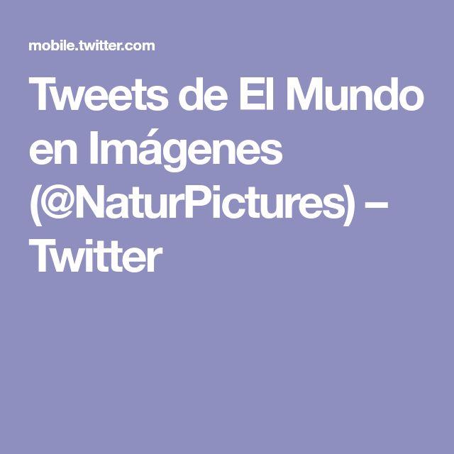 Tweets de El Mundo en Imágenes (@NaturPictures) – Twitter