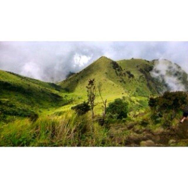 Taman Nasional Gunung Merbabu in Boyolali, Jawa Tengah. Christmas 2014