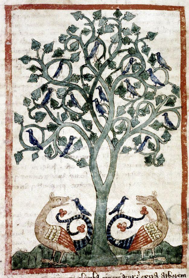 Medieval Bestiary : Peridexion tree Gallery