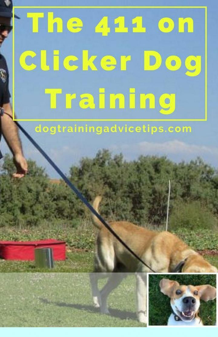Thoughtful Counseled Dog Training Online Try This Site Dog
