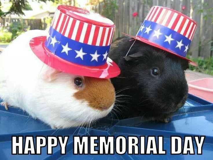 memorial day animal pics