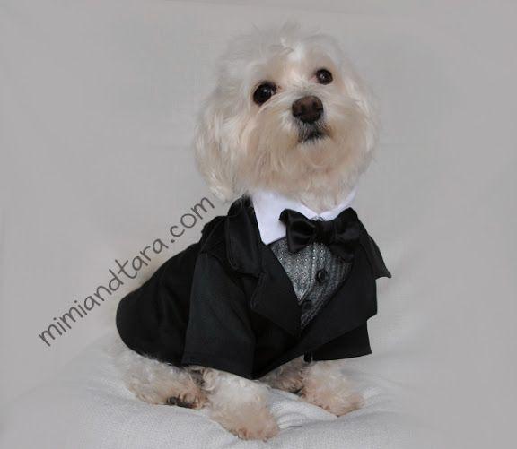 Suit dog
