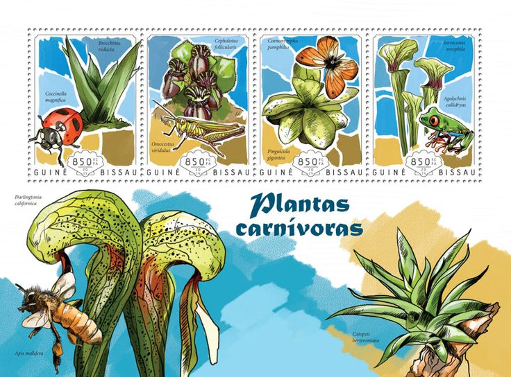 Post stamp Guinea-Bissau GB 14609 a	Carnivorous plants (Brocchinia reducta, {…}, Sarracenia oreophila)
