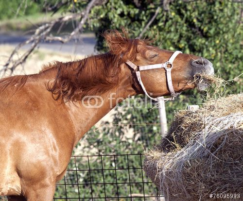 Funny #horse during the meal