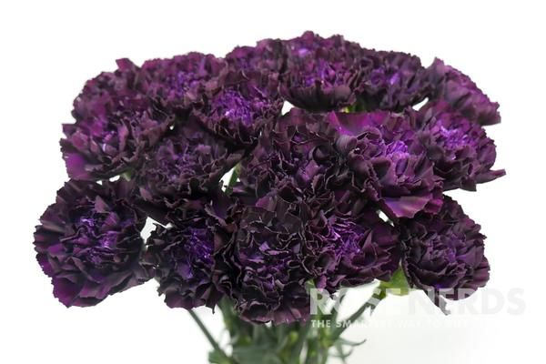 17 Best Ideas About Purple Carnations On Pinterest Purple Carnation Bouquet Deep Purple