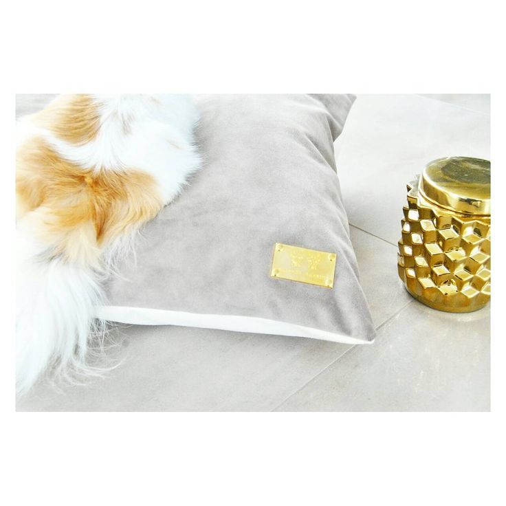 Pet bed cushion velvet branding home design Chihuahua gold pets lover gift