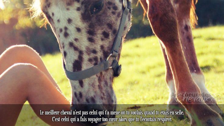 Le meilleur cheval n'est pas celui qui t'a mené où tu voulais quand tu étais en selle. C'est celui qui a fais voyager ton cœur alors que tu l'écoutais respirer.