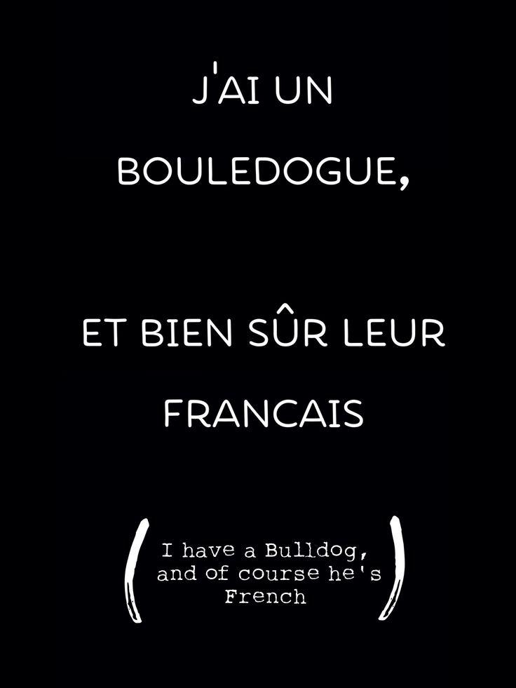 """""""J'AI UN BOULEDOGUE, ET BIEN SÛR LEUR FRANCAIS"""", I have a Bulldog, and of course he's French. 🐾❤️🍾"""