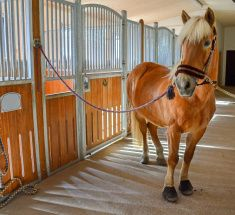 Horse on stable stock photo