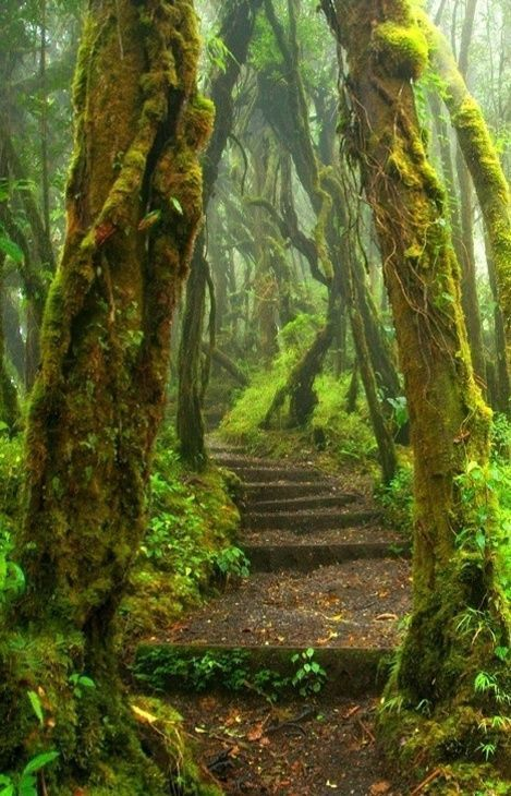 Hoh Rain Forest Trail at Olympic National Park in Washington State.