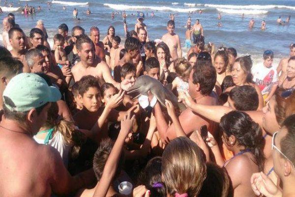 Teneri cuccioli Notizie: Argentina, baby delfino si spiaggia. Ma i turisti,...