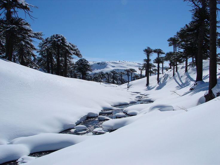 https://flic.kr/p/6gzHsf | Paisaje nevado en Caviahue Neuquén, Snow in Caviahue | Paisaje cubierto de nieve en Caviahue, en la Cordillera de los Andes.  Snowy landscape in Caviahue, in the Andes.