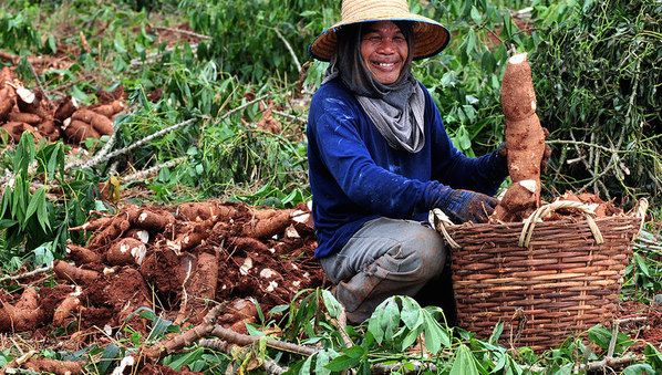 agriculture.vn is a portal site including Vietnam agriculture news, company database, business matching, report downloading and other support on developing your business in Vietnam