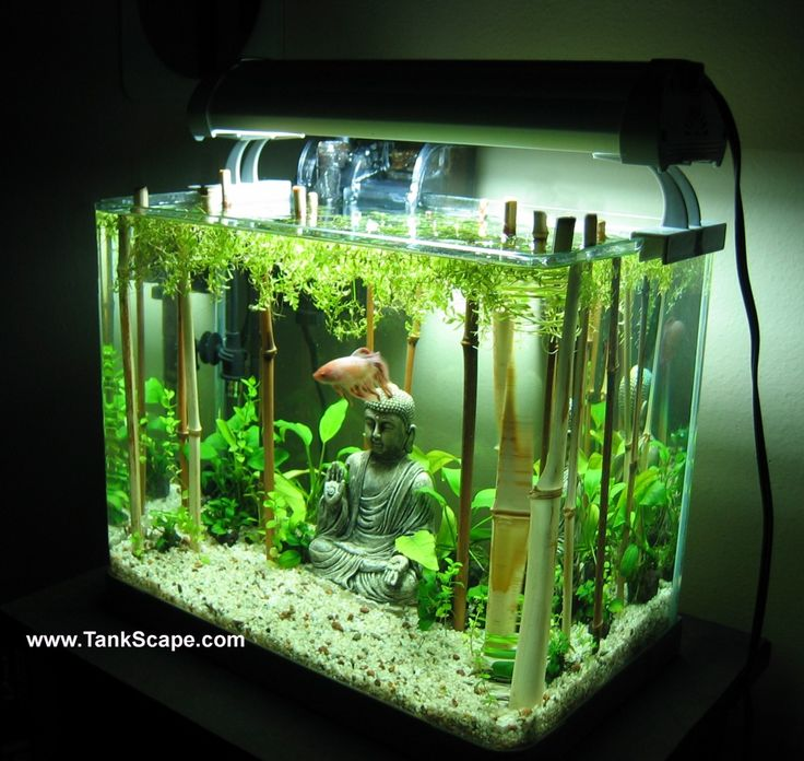 ... Bamboo Tanks, Betta Tanks, Buddha Fish, Aquascaping, Betta Fish Tanks