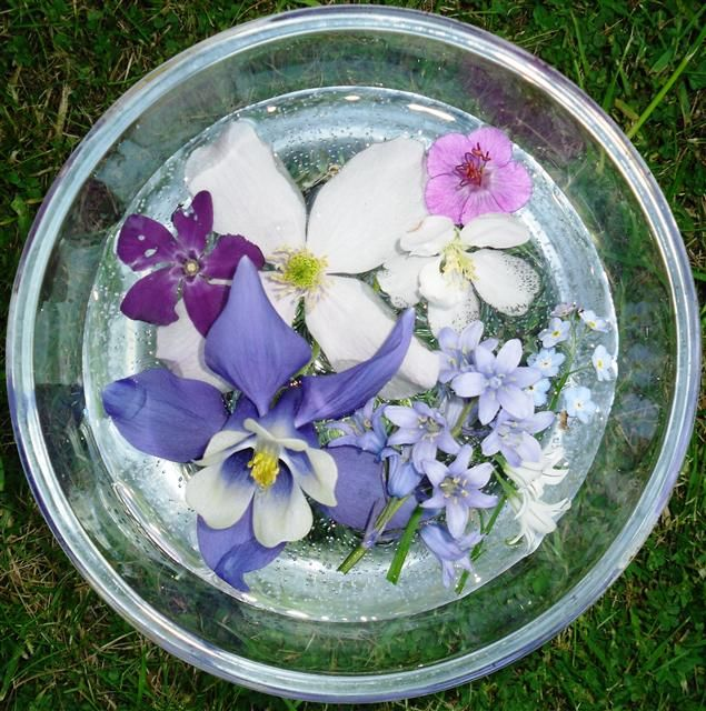 Flower essences are similar to homeopathic remedies. Each essence contains the vibrational pattern of the original plant in water. They are very useful for treating negative mental and emotional states and also for restoring balance.