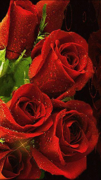 Rosas rojas animadas
