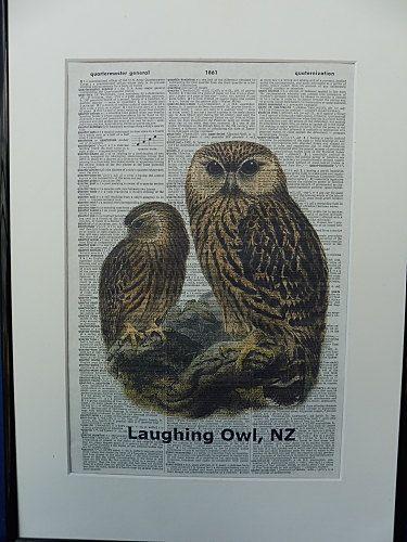 Laughing Owl Bird Dictionary Wall Art Print owl by DecorisDesigns