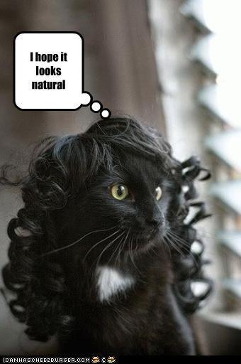 LOL!Nature Girls, Fashion Statement, Girls Generation, Funny Cat, Kitty Wigs, Funniest Fun, Funny Stuff, Animal, Black Girls