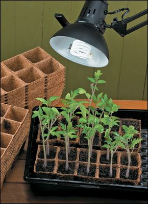 lee valley convert regular lamps into grow lights