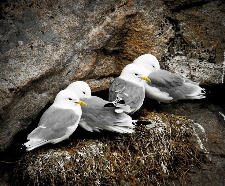 A couple of seagulls gathered on a cliff side