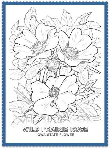 Mejores 150 imágenes de USA State Flowers en Pinterest ...