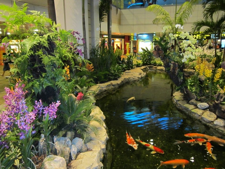 Koi pond at changi airport in singapore they have an for Indoor koi pond designs