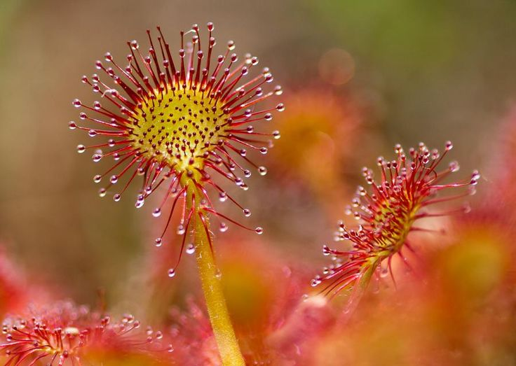0e28c5239d0cd8a47351cf589007b8bc--plants-flower.jpg