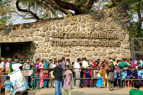 Amazing Experience in the #Mysore_Zoo - #Mysore_Zoo is one of the famous #holiday_destinations in the city. Officially the zoo is named as #Sri_Chamarajendra_Zoological_Gardens, which is spread over an area of 245 acres. It was constructed way back in the year 1892 under the royal patronage. It is the most #popular_attraction in the city and is well-maintained and taken care by the #forest_department.